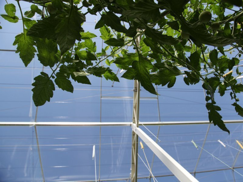 Venlo greenhouse roof system
