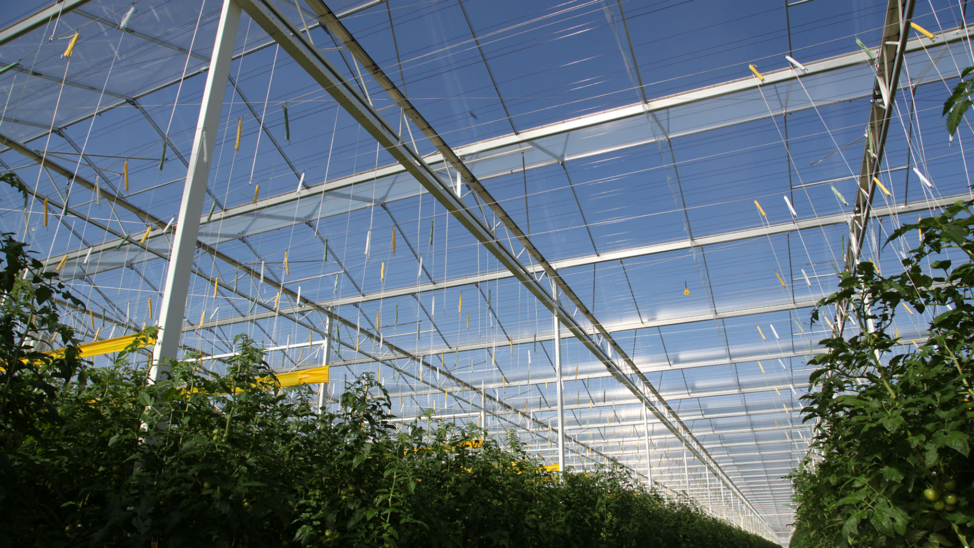 Steel greenhouse structure | Alcomij