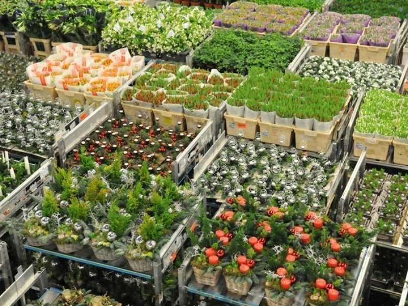 FloraHolland carts