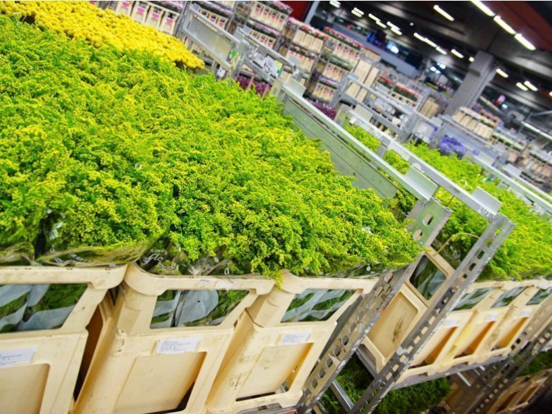 FloraHolland flower trolleys
